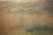 sunlight on brown grasses in a field