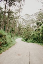 paved path through a forest