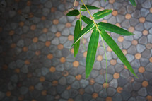 bamboo leaves over a colored brick court yard. Close-up of green bamboo leaves.