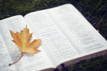 yellow fall leaf on the pages of a Bible