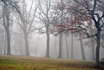 Foggy morning in the woods.