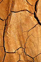 cracks in dry soil