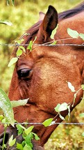 horse head eating