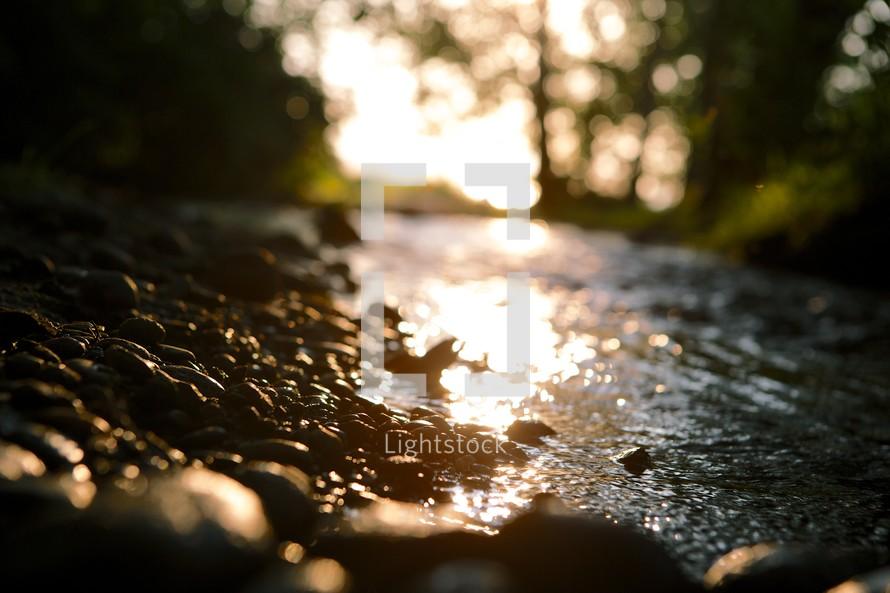 Babbling brook at sunrise.