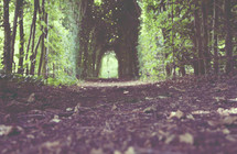 Tunnel of trees, a passage through the garden.