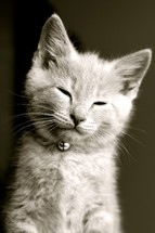 Kitten with eyes closed