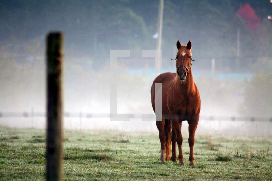 Horse in pasture behind barbed wire fence.