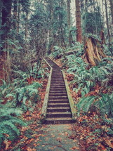 steps in a forest