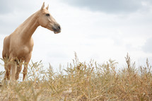 tan horse and oats