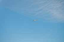 seagull in a blue sky