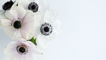 white flowers with black centers on a white background