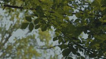 green summer leaves in a forest