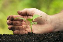 man planting in a garden