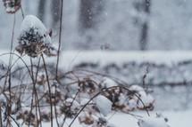 snow on plants