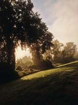 sunlight on the grass