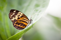 brown, orange, and yellow butterfly