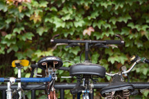 Bicycles in a bicycle rack and green ivy.