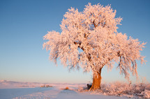 ice covered winter tree