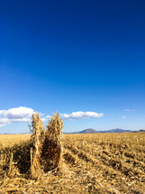 plowed corn field