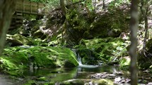 a flowing brook over mossy stones