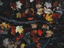 fall leaves and sticks on the ground