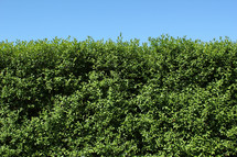 blue sky above bushes