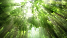 sunbeams in a green forest