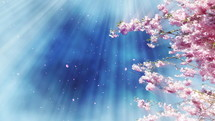 radiating light and spring blossoms