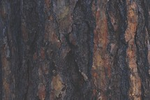 Tree bark in Yosemite National Forest