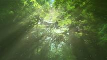 sunbeams and green summer leaves
