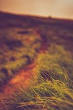worn dirt path