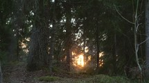 bokeh sunlight through trees in a forest at sunset