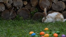 rabbit and Easter eggs in grass