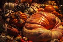 large patch of pumpkin varieties