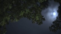moonlight through tree branches