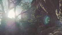 intense sunlight through the trees