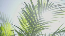 palm fronds blowing in the breeze
