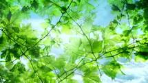 green summer branches