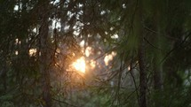 sunlight through trees in a forest at sunset