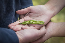 hand holding peas in a pod; symbolizing the addition of another member of their family.