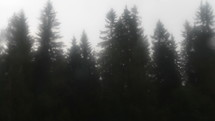 fall rain in a pine forest