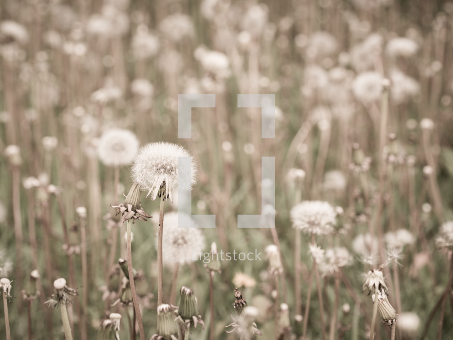Field of weeds.