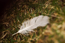 a feather in the grass