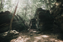 rocks in a forest