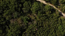 Aerial top-down bird's eye drone view of green dense trees and beach walkway