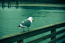 Seagull perched on wooden railing next to water.