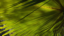 Tropical Palm Fronds bathed in sunlight in the deep woods of a tropical jungle.