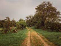 a worn dirt road through an orchard