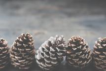 pines cones