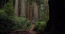 man hiking in a redwood forest